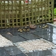 Bed and Breakfast in Eccleshall: Our Local Duck Family