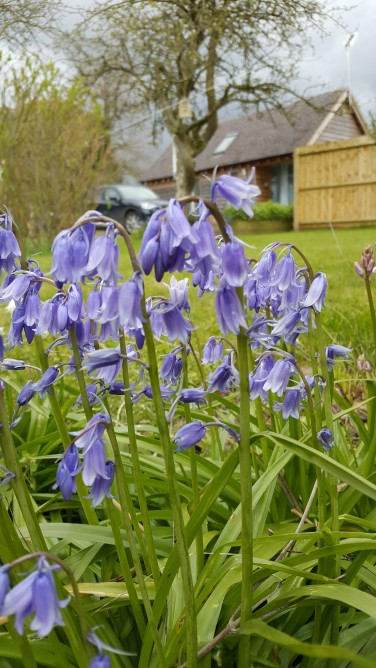 Bed and Breakfast in Eccleshall: Beautiful Bluebells