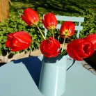 Bed and Breakfast in Eccleshall: Garden Flowers
